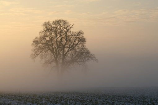 Frosty mornings but no white Christmas for UK, forecasters say